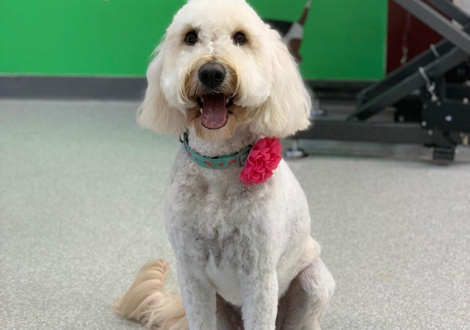 Kai Lula, Dog of the Month