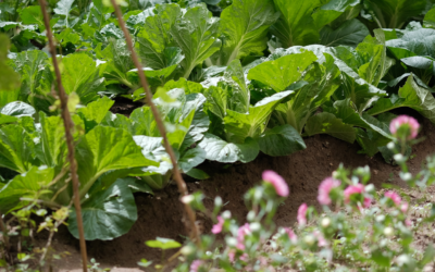 Cloverdale Community Garden Update