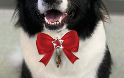 December Dog of the Month