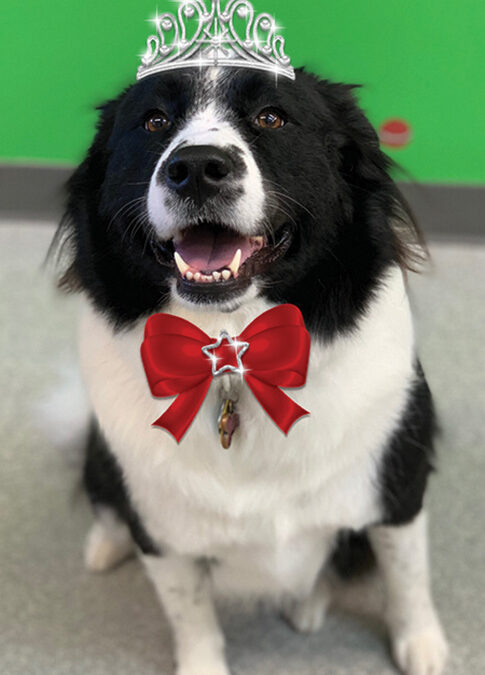 Penny - Dog of the Month