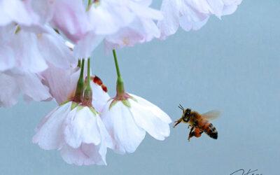 Surprising Honeybee News