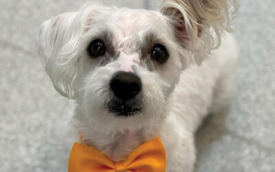 September 21 Dog of the Month